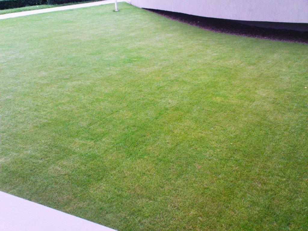 wertykulacja trawnika ekoland ogrody skierniewice